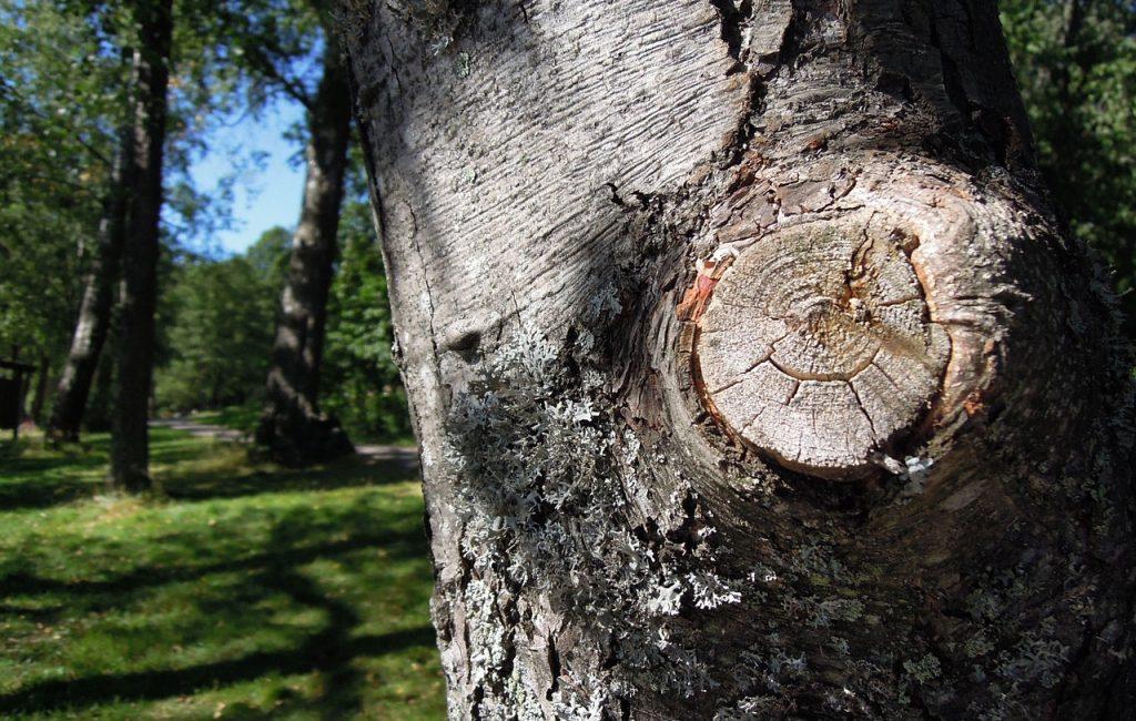 Bradenton Tree Removal